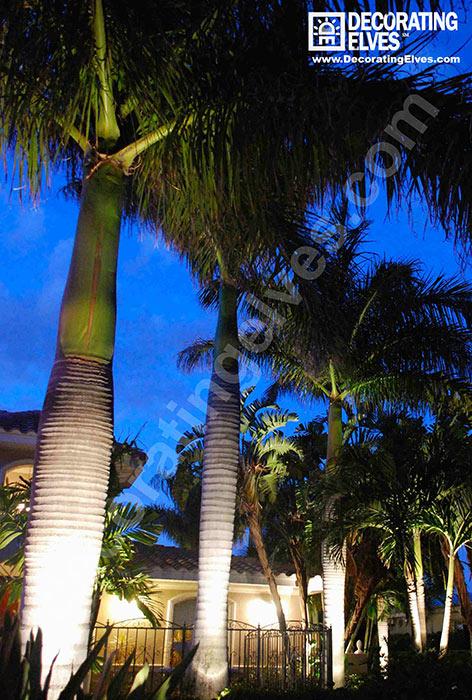 Uplighting-Royal-Palm--www