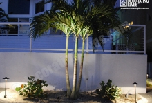 LED-Uplighting-on-palm,-path-lighting-on-pavers-www.decoratingelves.com